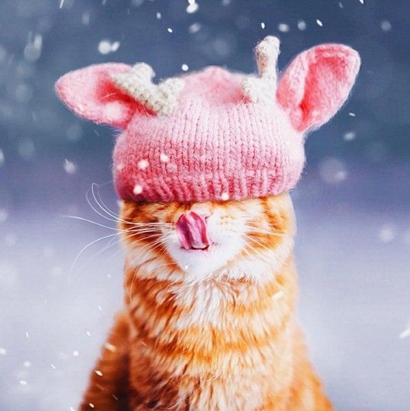 Cutie! | Animals Zone