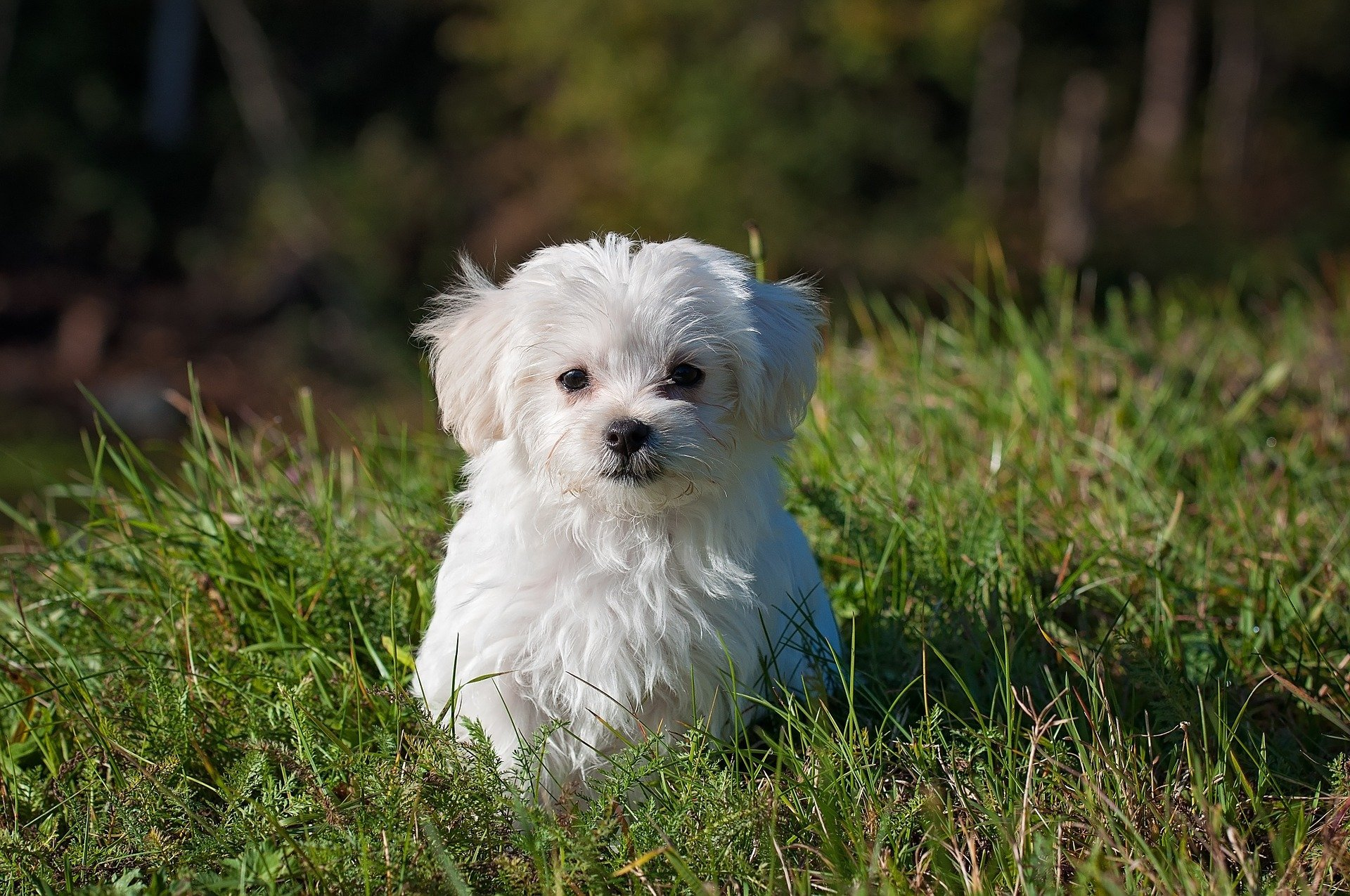 Maltese. Happy National Puppy Day! Click for more adorable photos! | Animals Zone